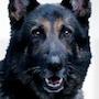 Dog X Police-Baruto.jpg