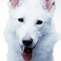 Dog X Police-Shiro.jpg