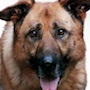 Dog X Police-Aretkusu.jpg