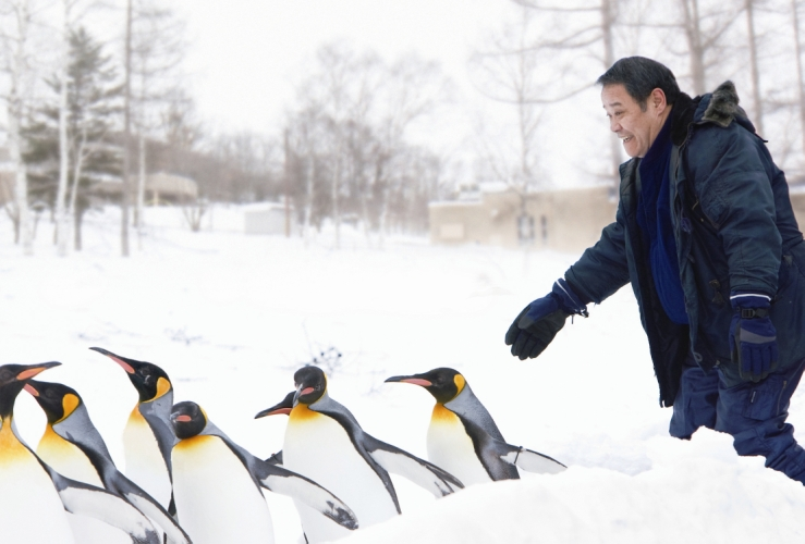 Penguins in the Sky-Asahiyama Zoo-03.jpg