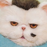 A Man and His Cat-Ryunosuke Kamiki.jpg