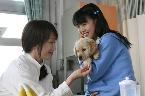 10 Promises To My Dog - AsianWiki