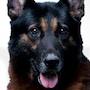 Dog X Police-Burando.jpg