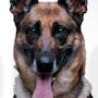 Dog X Police-Matku.jpg